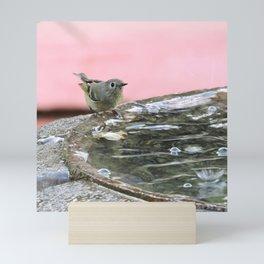 Kinglet at the Basin Rim Mini Art Print