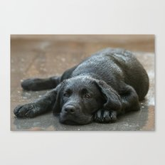 Labrador dog in the rain ! Canvas Print