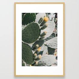 flowering cactus i Framed Art Print
