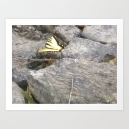 Resting butterfly Art Print