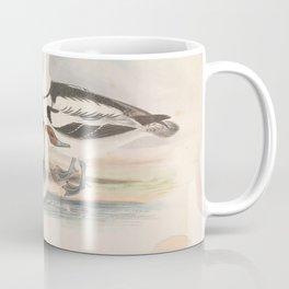 Smew, mergus albellus5 Coffee Mug