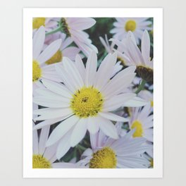 Daisy dream Art Print