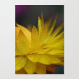 Straw flower II Canvas Print