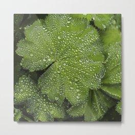 Water drops on fresh green Leaf Metal Print
