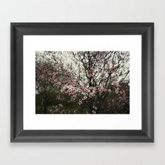 Pink spring blossom Framed Art Print