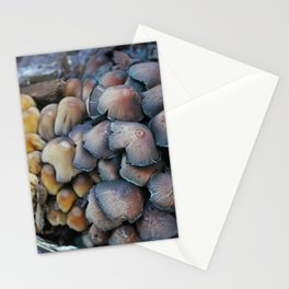 New and Old Mushroom Growth Stationery Cards