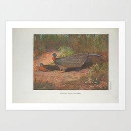 Bornean Argus Pheasant5 Art Print