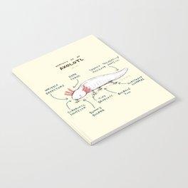 Anatomy of an Axolotl Notebook