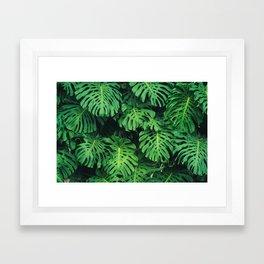 Monstera leaf jungle pattern - Philodendron plant leaves background Framed Art Print