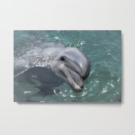 Dolphin swimming in the in red sea of Israel near the city off Eilat Metal Print
