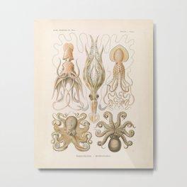 Vintage Octopus Illustration Print, Scientific Illustrations, Octopus Print, Octopus Wall Art Metal Print