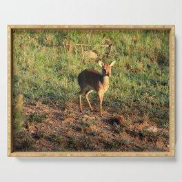 Masai Mara Dikdik Deer Serving Tray