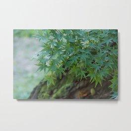 Japan Summer Maple Metal Print