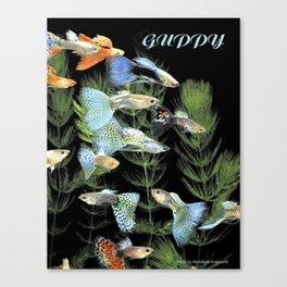 Guppy Canvas Print
