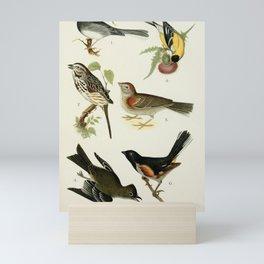 Snow Bird, Song Sparrow, Phoebe, American Goldfinch, Vesper Sparrow, Towhee10 Mini Art Print