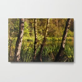 Hot summer day at the forest lake Metal Print