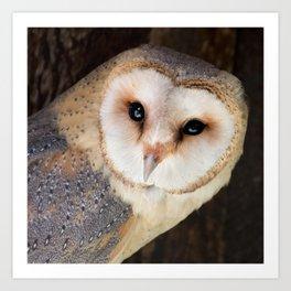Owl Print Brown & Gold Art Print