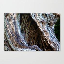 Old Olive Tree wood Canvas Print