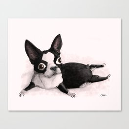 The Little Fat Boston Terrier Canvas Print