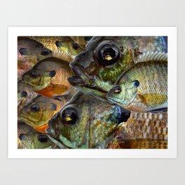 Bluegill Kaleidoscope 1 Art Print
