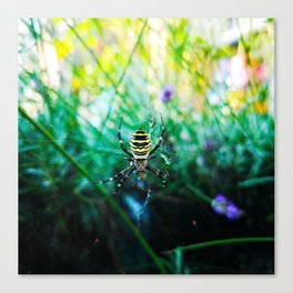 Waspspider in his Web Canvas Print