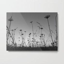 Sunset daisies monochrome Metal Print