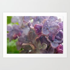 Lilacs in the Rain Art Print