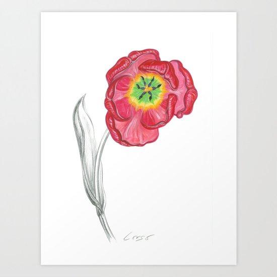 Tulip 01 Botanical Flower Art Print