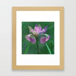 Light&Lively Framed Art Print