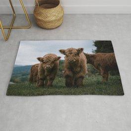 Scottish Highland Cattle Calves - Babies playing II Rug