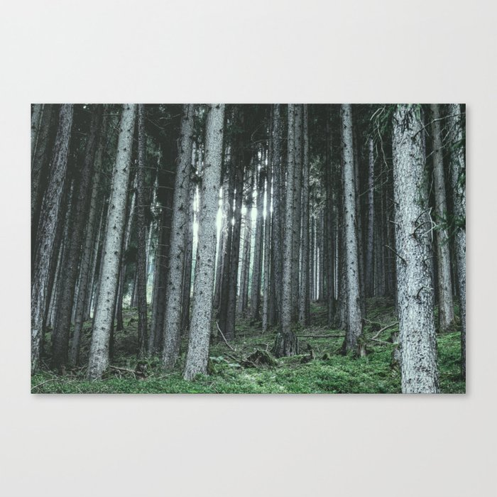 Woodland, Forest, Trees Canvas Print