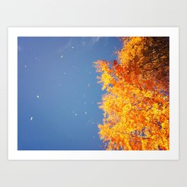Autumn leaves in the wind Art Print