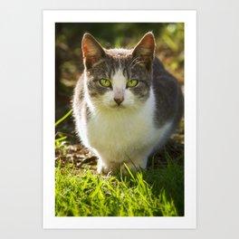 Feral Kauai Kitty Art Print