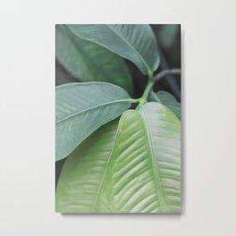 Botanic Touch Bold Metal Print
