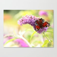 pastel peacock (butterfly) Canvas Print
