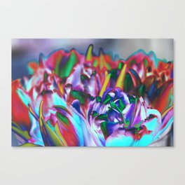 Colored Tulips Canvas Print
