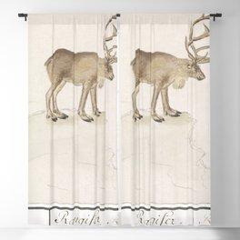 Reindeer Rangifer tarandus (1596-1610) by Anselmus Botius de Boodt Blackout Curtain