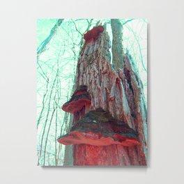 Tree Mushrooms Afterglow Metal Print