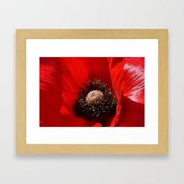 Sunlit Poppy Framed Art Print