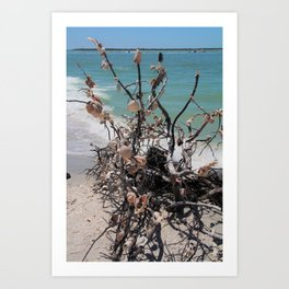 Sea Shell Samba I Art Print