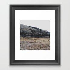 Silverton Fox Framed Art Print