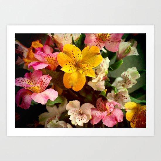 Lily of the Incas Bouquet Art Print