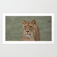 The English Lioness Art Print
