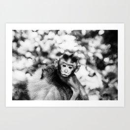 Monkey Pucker Art Print