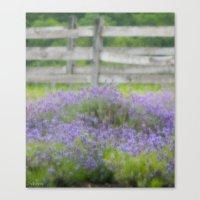 lavender Canvas Prints featuring Lavender by Scherer Art