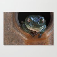 ashton irwin Canvas Prints featuring Irwin the Frog by Morgan Roddick