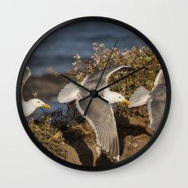 California Seagull (Larus californicus) taking off from a bluff in Mendocino, California. Wall Clock