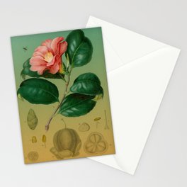 Magnolia Branch Stationery Cards