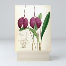 Masdevallia Harryana Coerulescens Vintage Lindenia Orchid Mini Art Print
