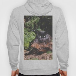 The king of the cats Hoody
